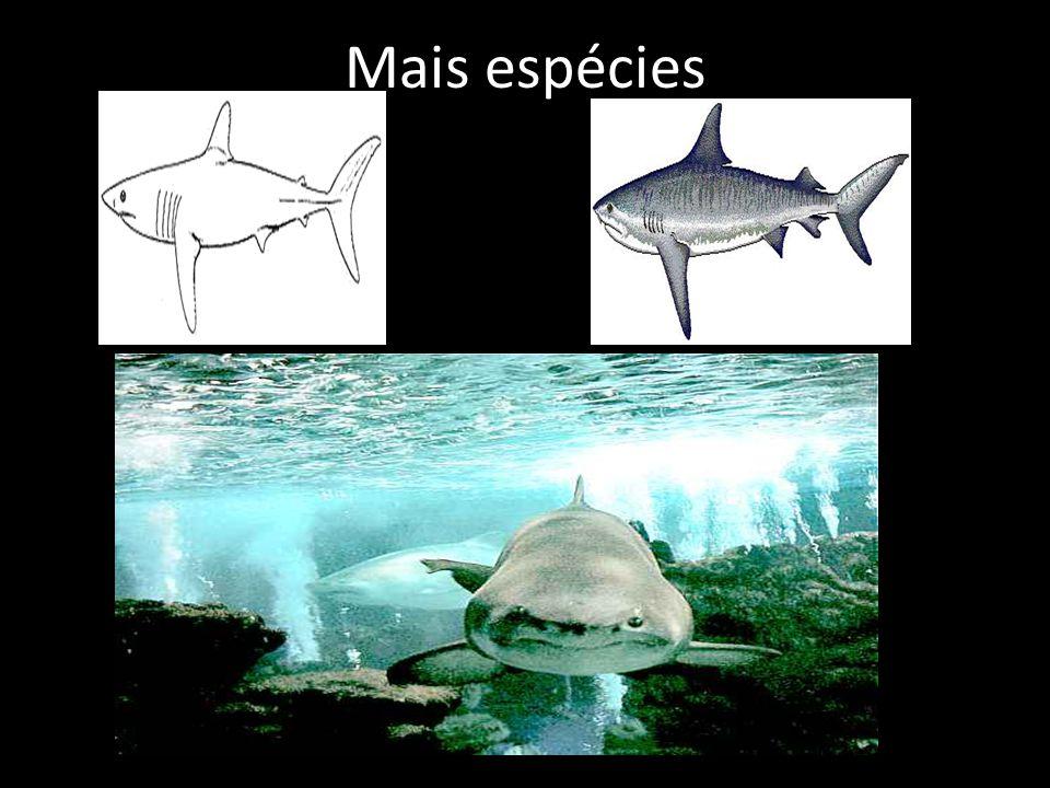 Mais espécies