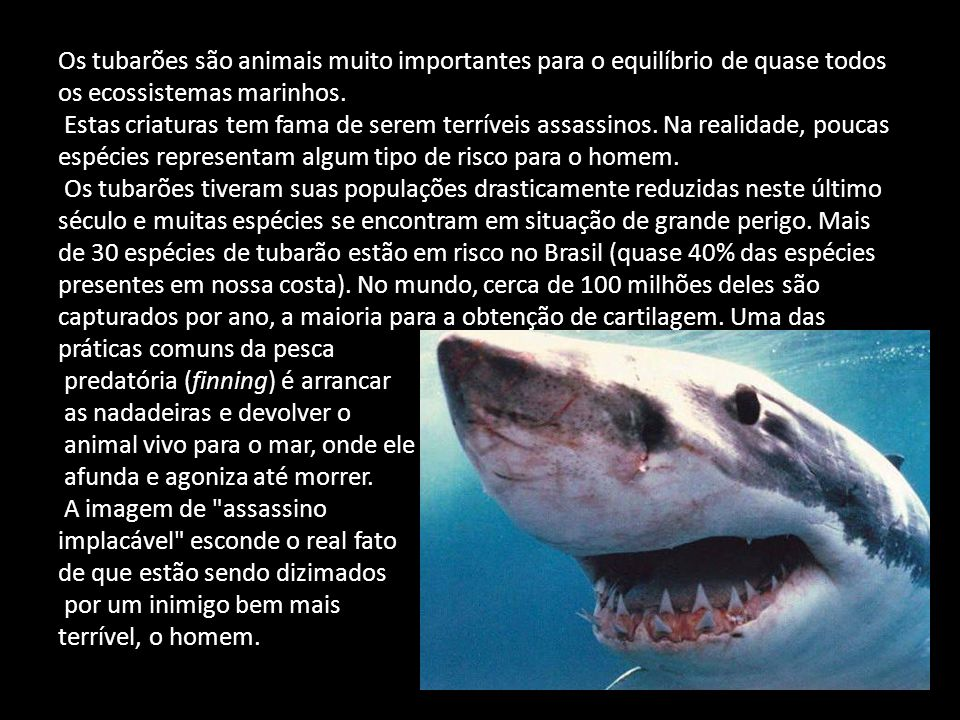 Os tubarões são animais muito importantes para o equilíbrio de quase todos os ecossistemas marinhos.