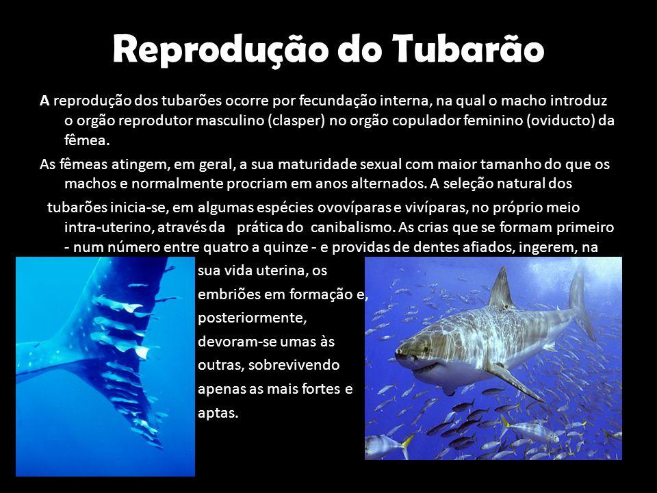 Reprodução do Tubarão