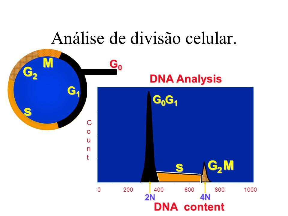 Análise de divisão celular.