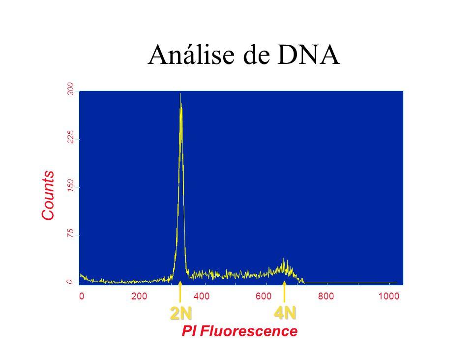 Análise de DNA 2N 4N Counts PI Fluorescence 200 400 600 800 1000 300