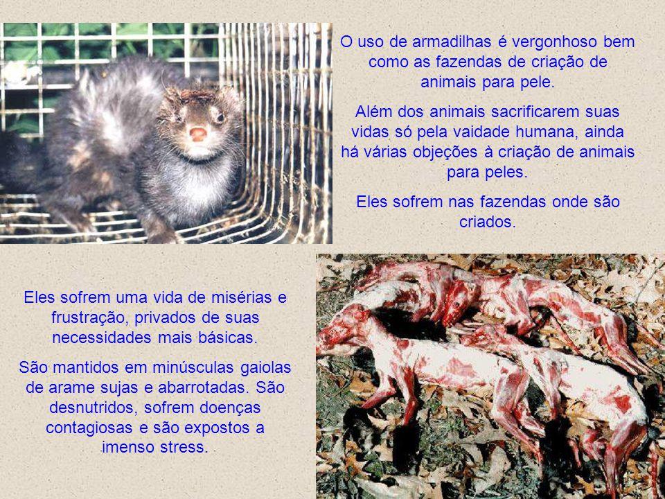 Eles sofrem nas fazendas onde são criados.