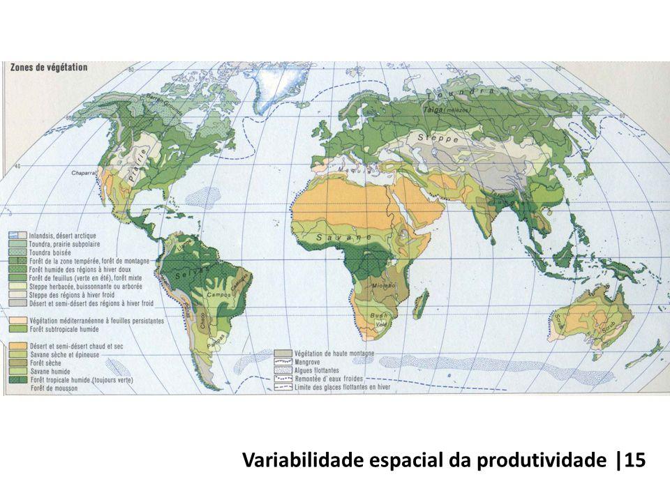 Variabilidade espacial da produtividade |15
