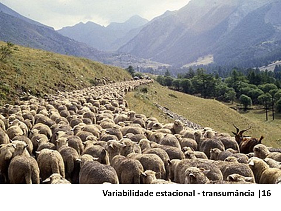 Variabilidade estacional - transumância |16