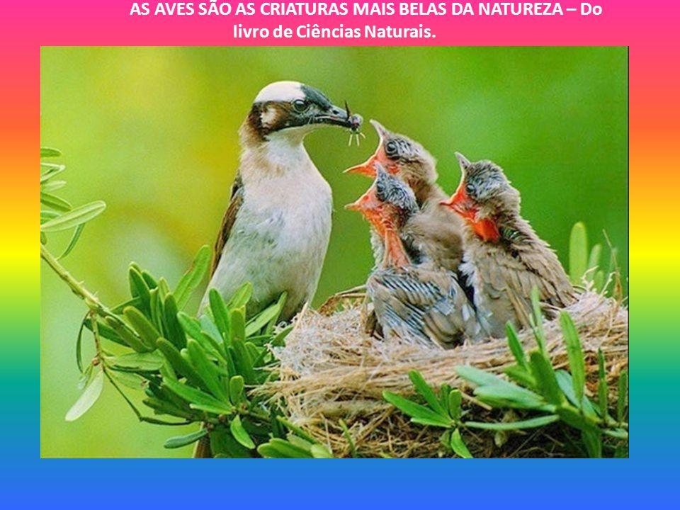 AS AVES SÃO AS CRIATURAS MAIS BELAS DA NATUREZA – Do livro de Ciências Naturais.