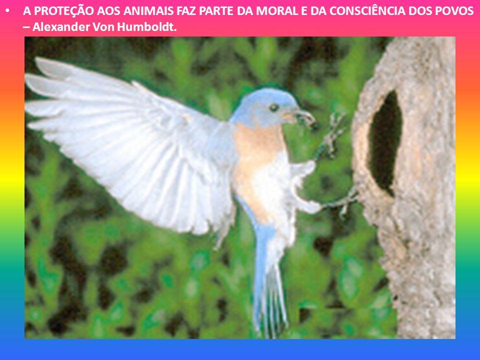 A PROTEÇÃO AOS ANIMAIS FAZ PARTE DA MORAL E DA CONSCIÊNCIA DOS POVOS – Alexander Von Humboldt.