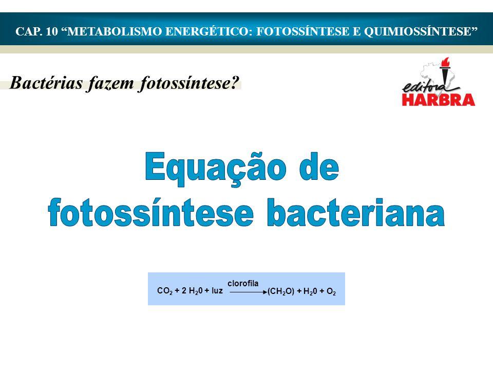 Equação de fotossíntese bacteriana