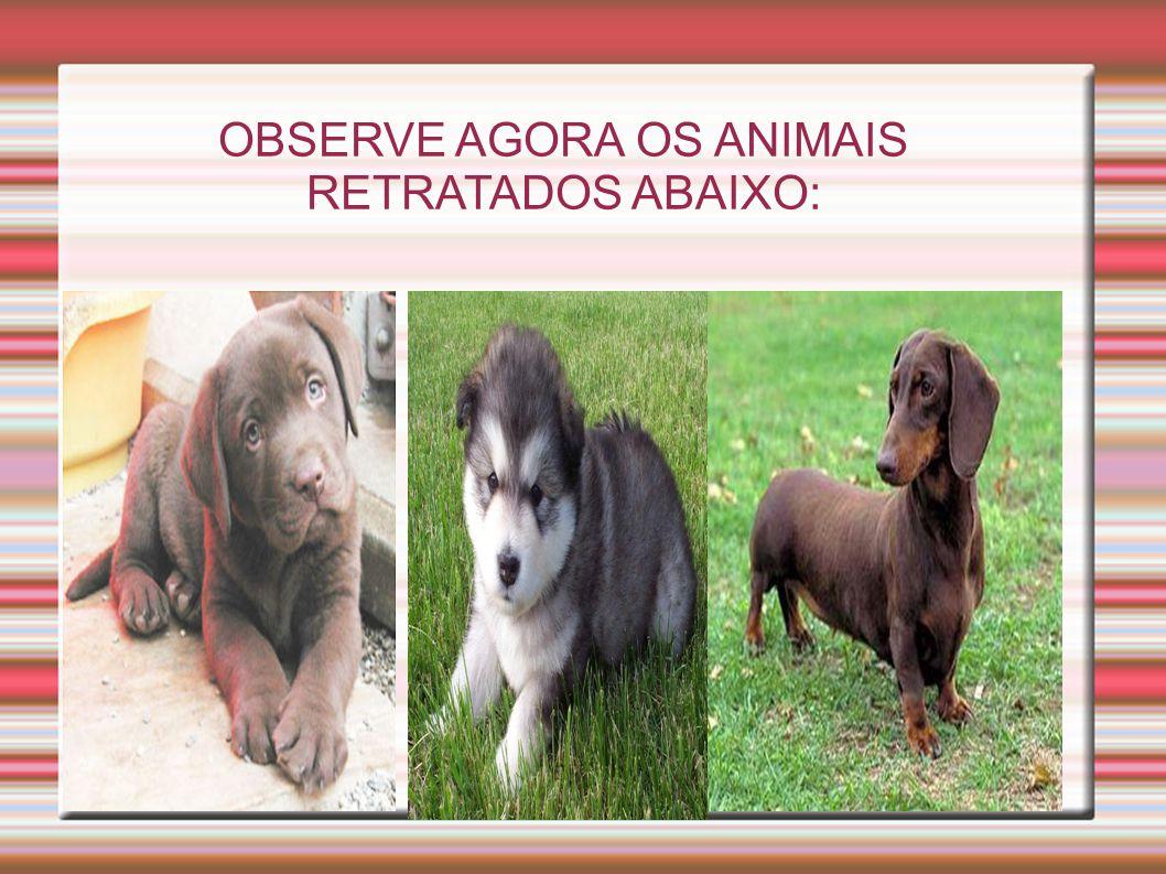 OBSERVE AGORA OS ANIMAIS RETRATADOS ABAIXO: