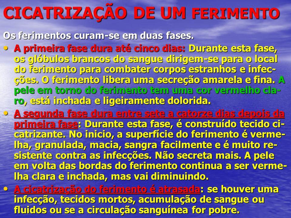 CICATRIZAÇÃO DE UM FERIMENTO