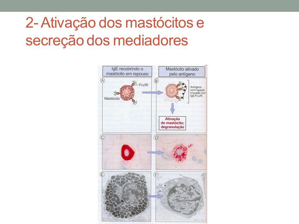 2- Ativação dos mastócitos e secreção dos mediadores