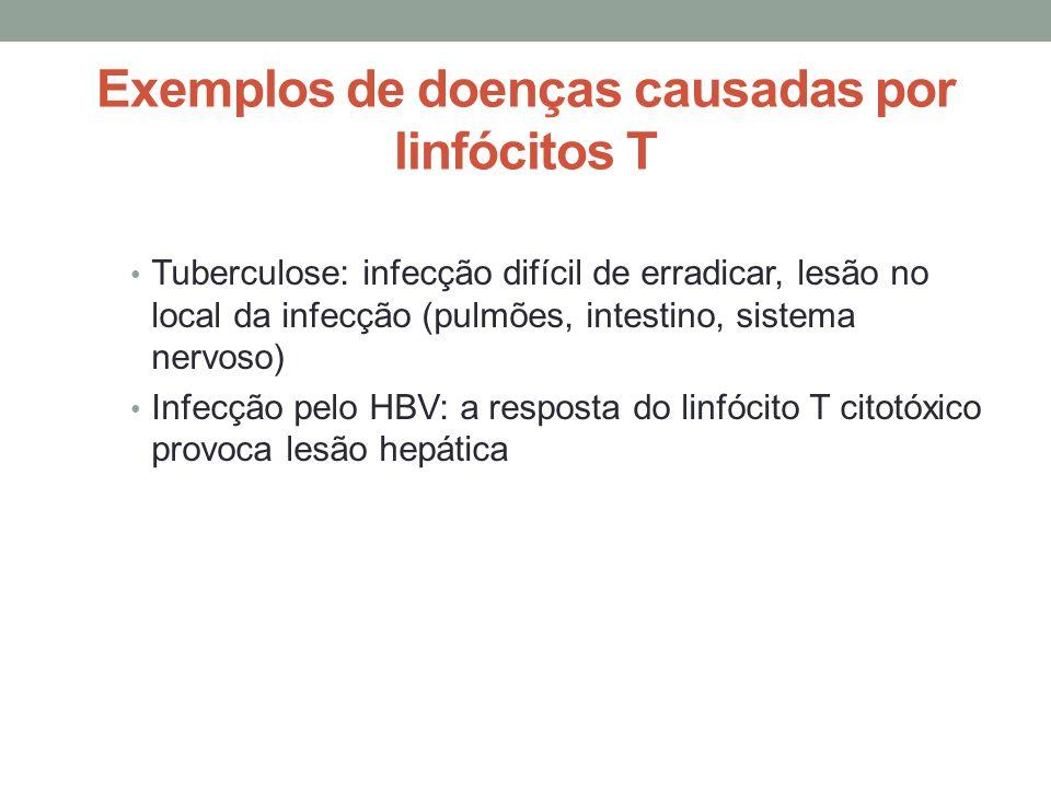 Exemplos de doenças causadas por linfócitos T