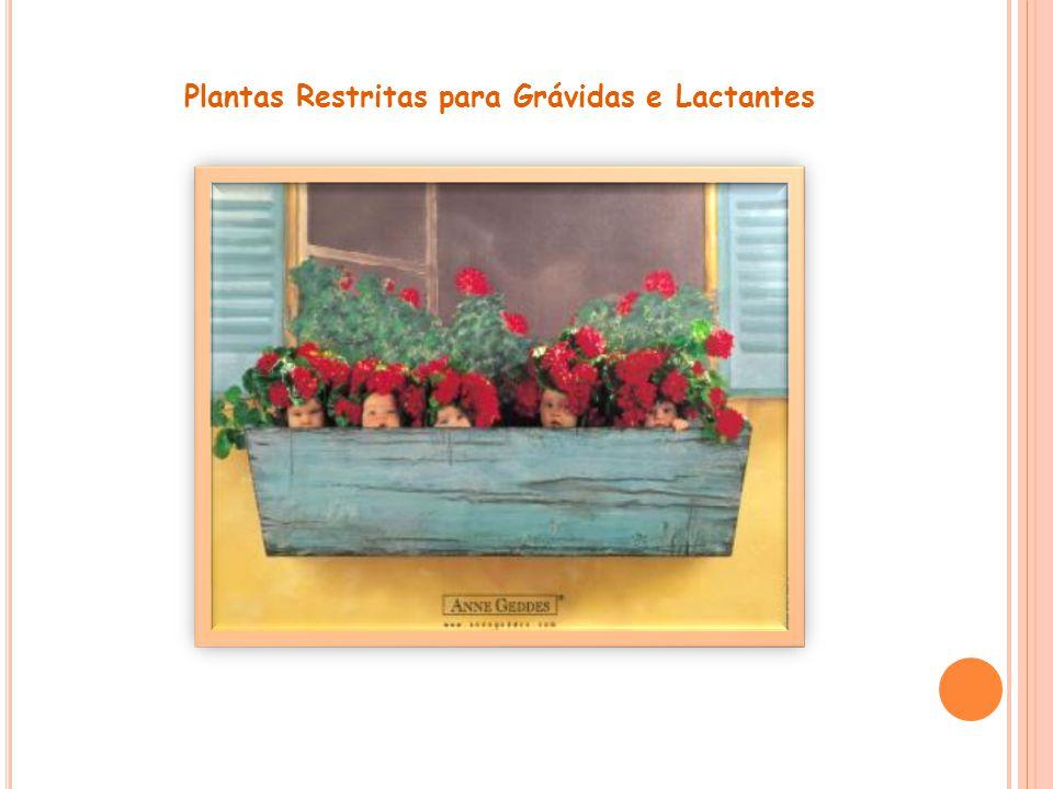 Plantas Restritas para Grávidas e Lactantes