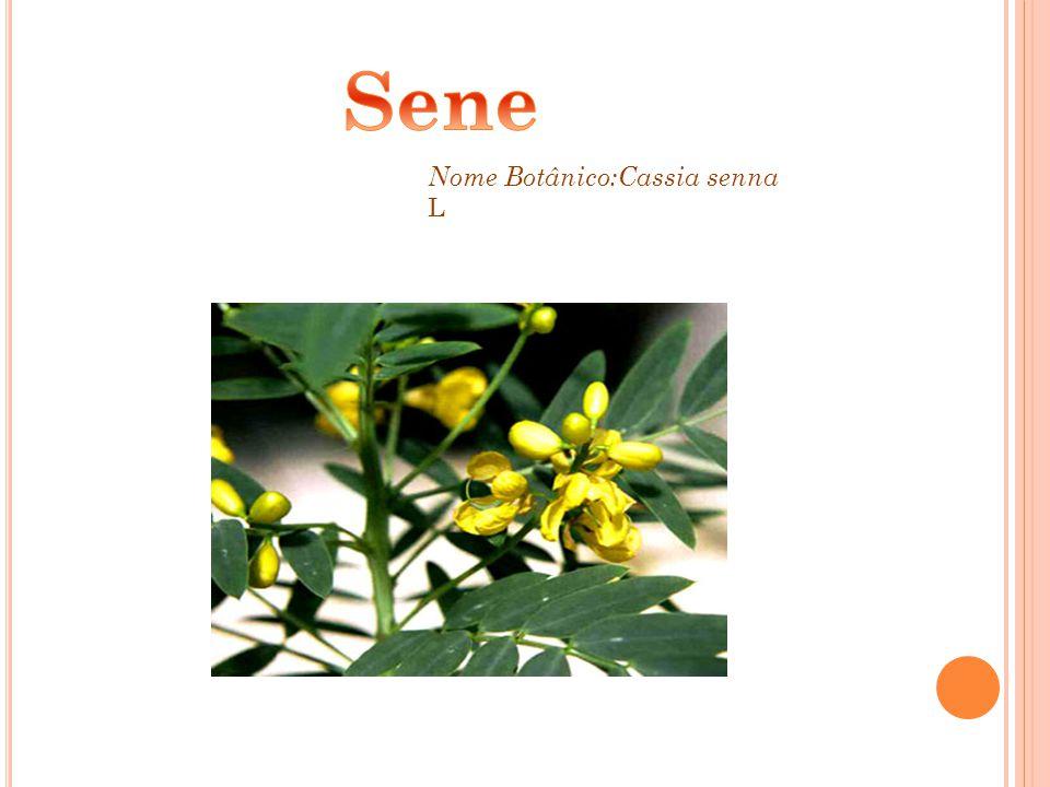 Sene Nome Botânico:Cassia senna L