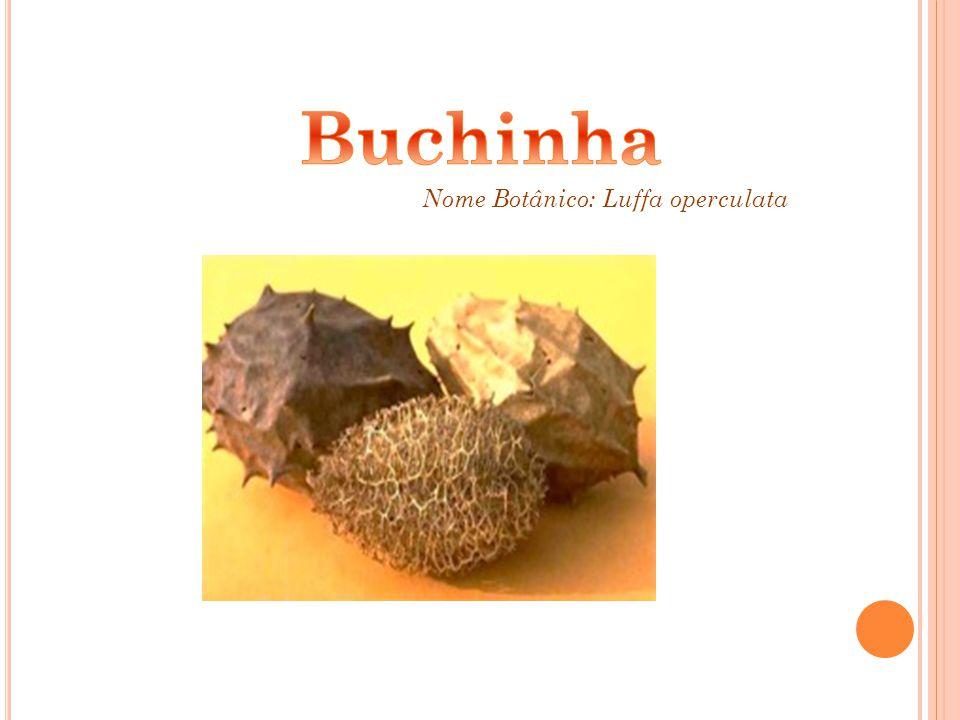 Buchinha Nome Botânico: Luffa operculata