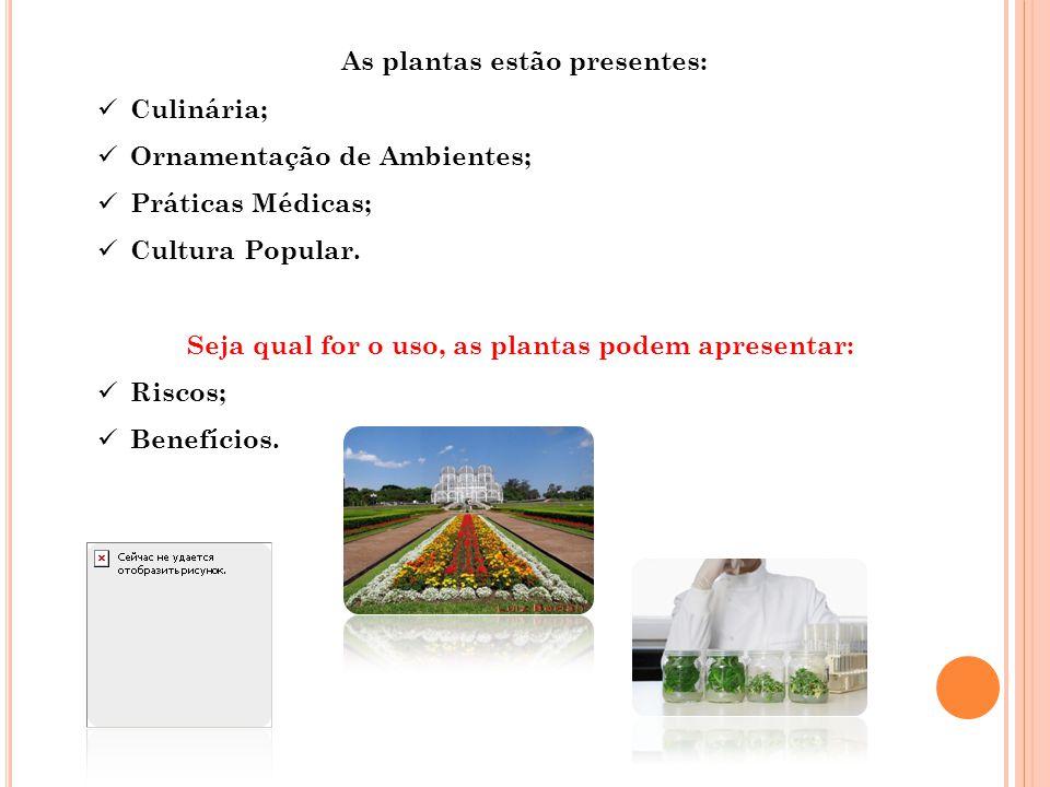 As plantas estão presentes: Culinária; Ornamentação de Ambientes;