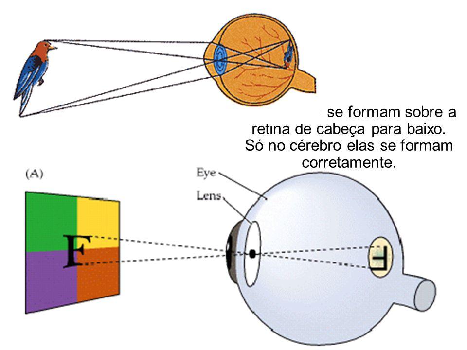As imagens se formam sobre a retina de cabeça para baixo