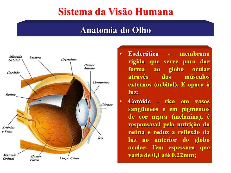 Dorable Vasos De La Retina Anatomía Fotos - Imágenes de Anatomía ...
