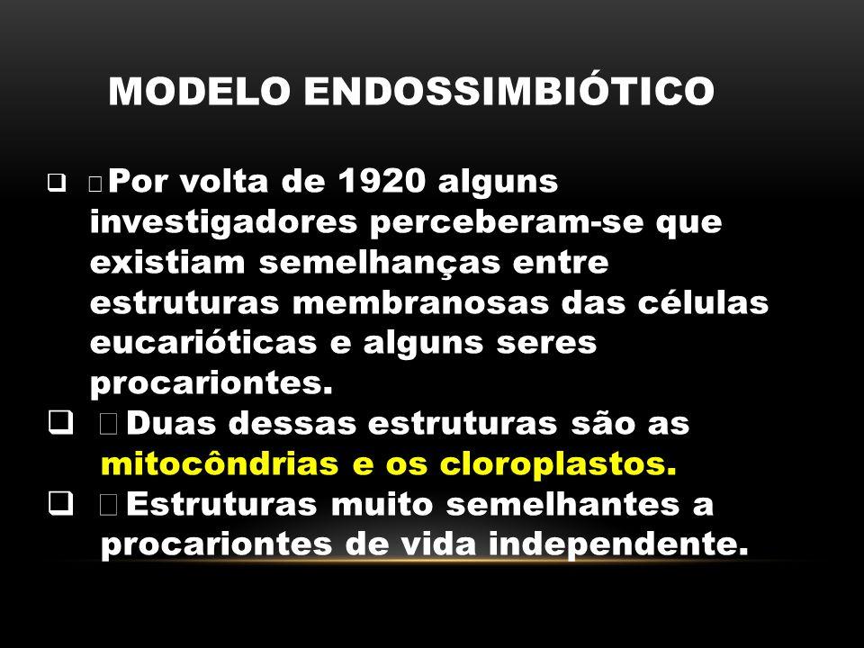 MODELO ENDOSSIMBIÓTICO