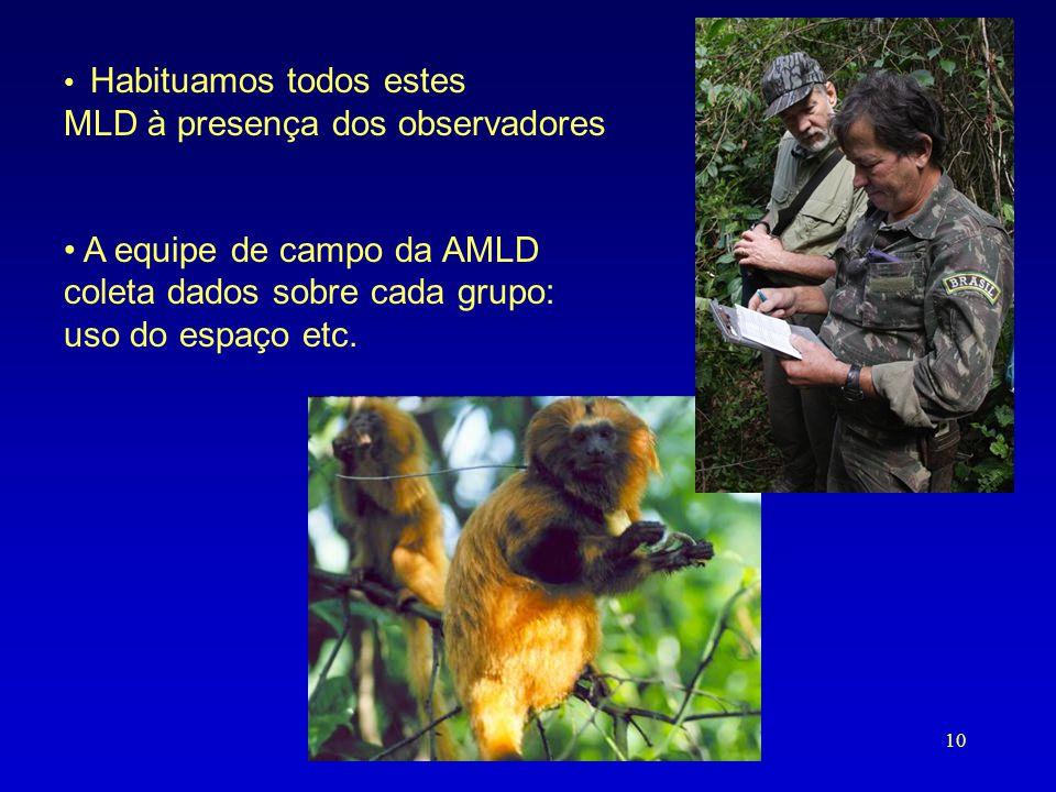 MLD à presença dos observadores