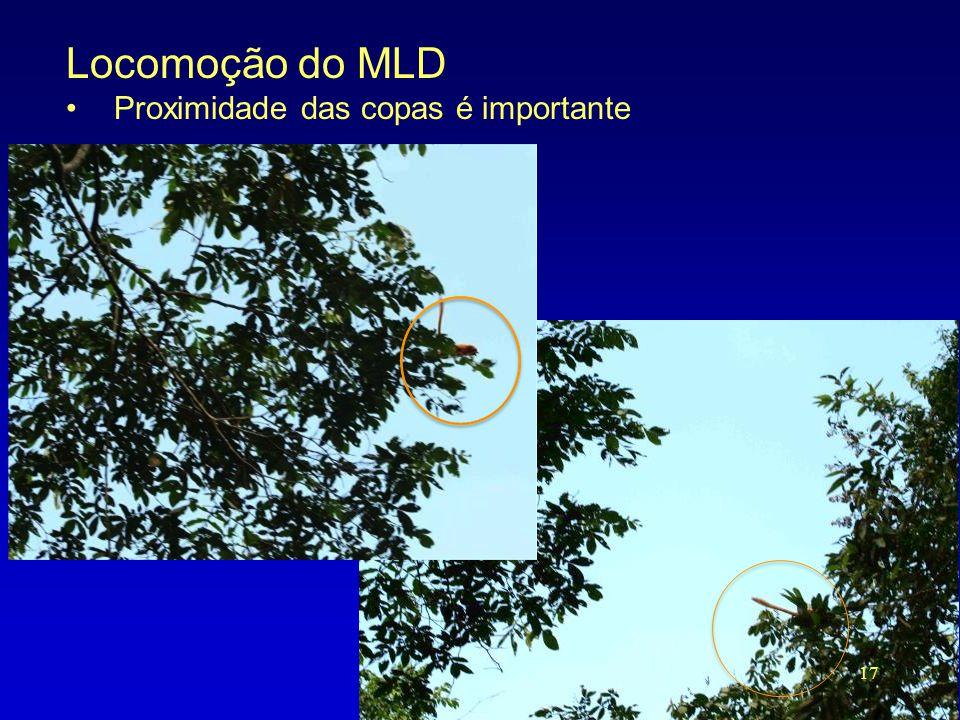 Locomoção do MLD Proximidade das copas é importante