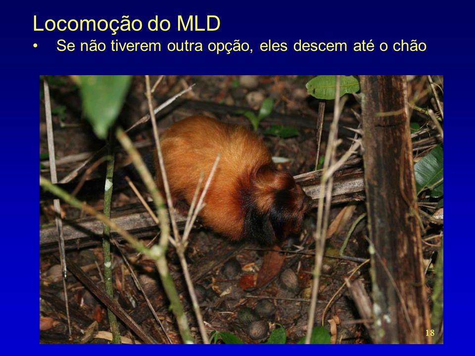 Locomoção do MLD Se não tiverem outra opção, eles descem até o chão