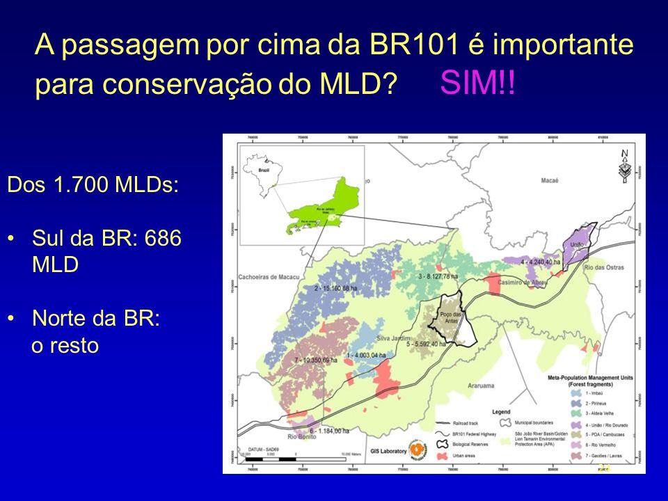 A passagem por cima da BR101 é importante para conservação do MLD SIM!!