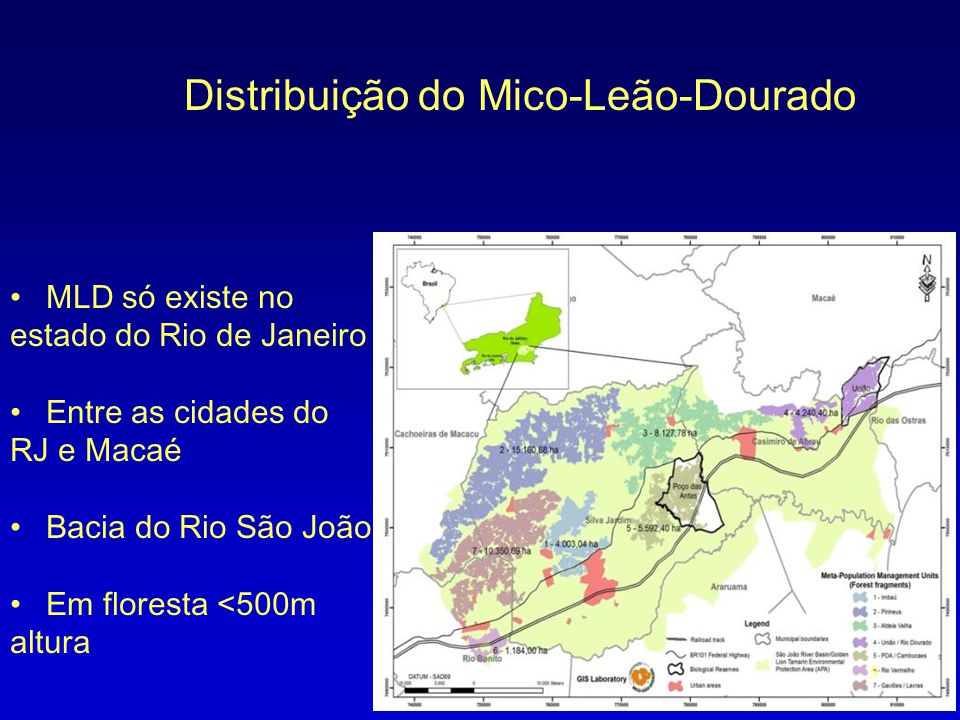 Distribuição do Mico-Leão-Dourado