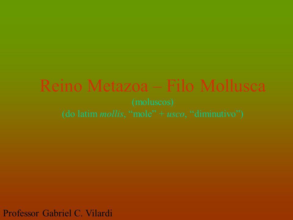 Reino Metazoa – Filo Mollusca