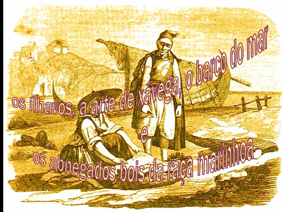 os ílhavos, a arte de xávega, o barco do mar e