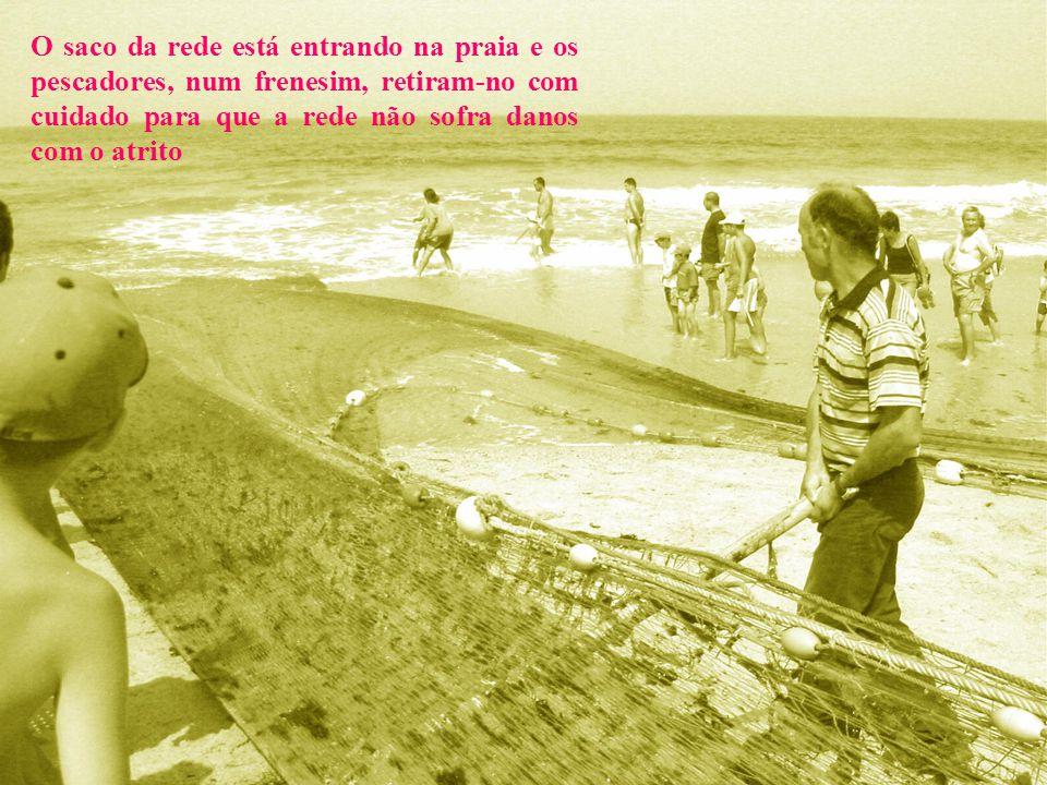 O saco da rede está entrando na praia e os pescadores, num frenesim, retiram-no com cuidado para que a rede não sofra danos com o atrito