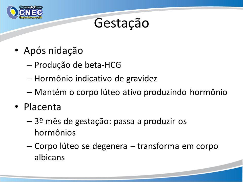 Gestação Após nidação Placenta Produção de beta-HCG