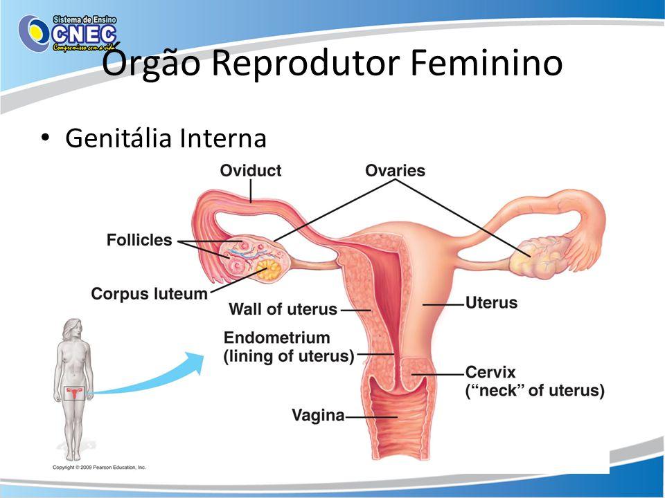 Órgão Reprodutor Feminino