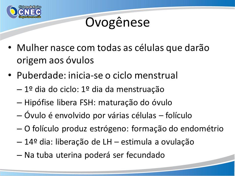 Ovogênese Mulher nasce com todas as células que darão origem aos óvulos. Puberdade: inicia-se o ciclo menstrual.