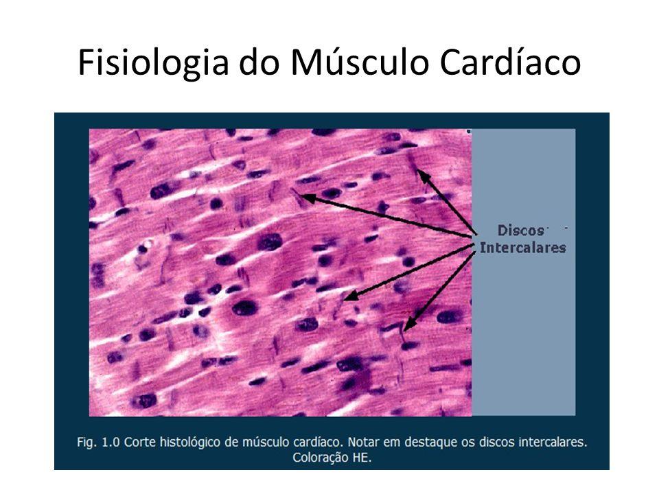Vistoso Músculo Cardíaco Bandera - Anatomía de Las Imágenesdel ...