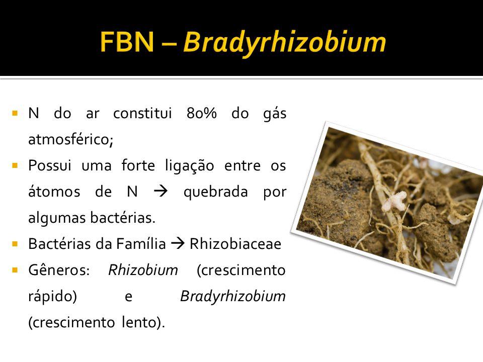 FBN – Bradyrhizobium N do ar constitui 80% do gás atmosférico;