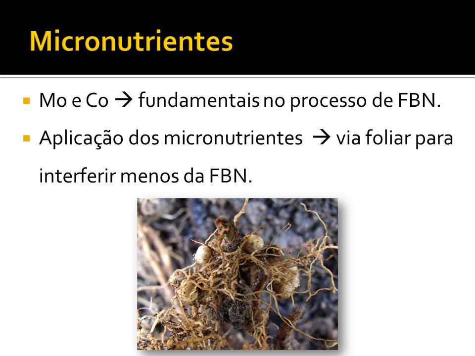 Micronutrientes Mo e Co  fundamentais no processo de FBN.