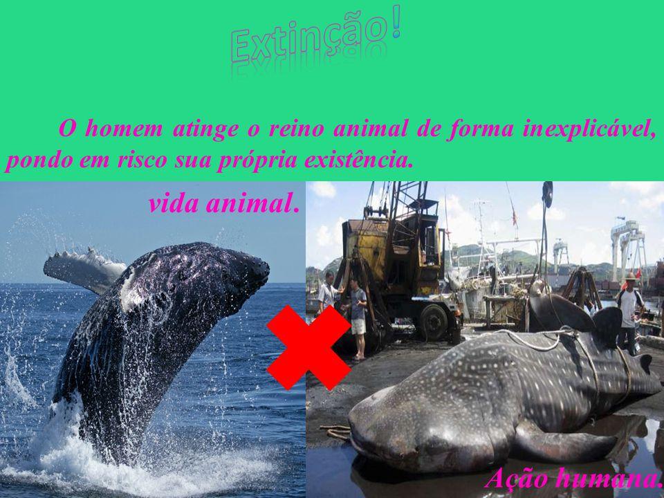Extinção! vida animal . Ação humana.