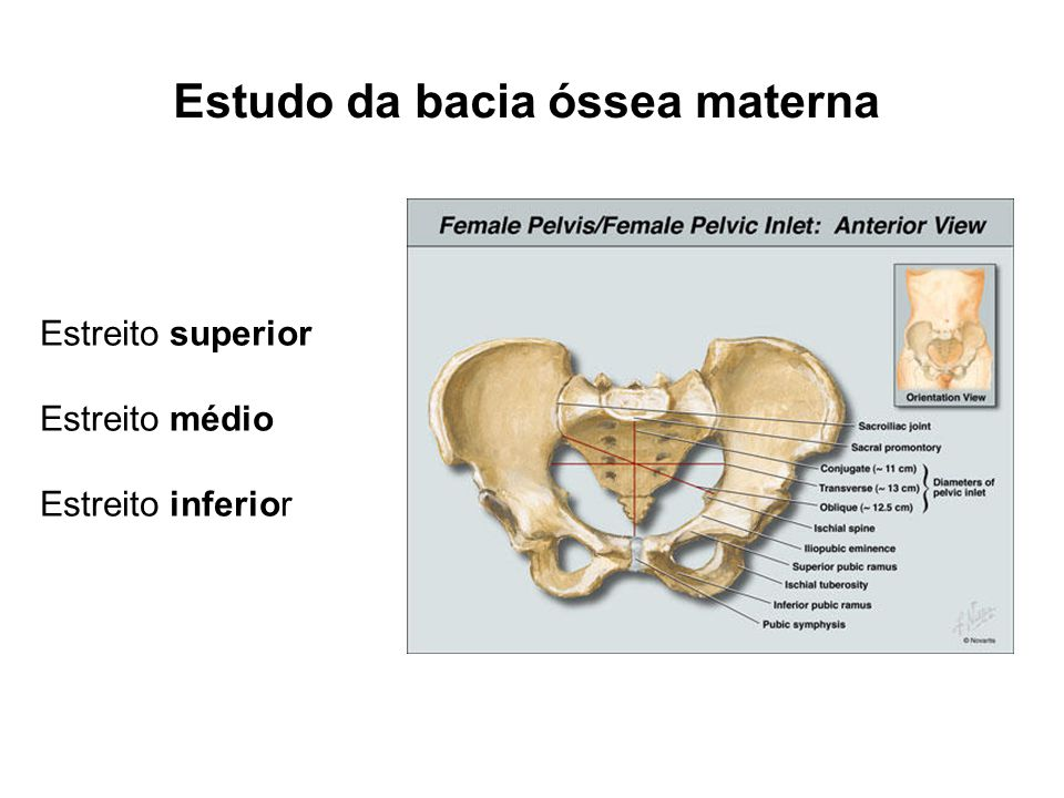 Estudo da bacia óssea materna