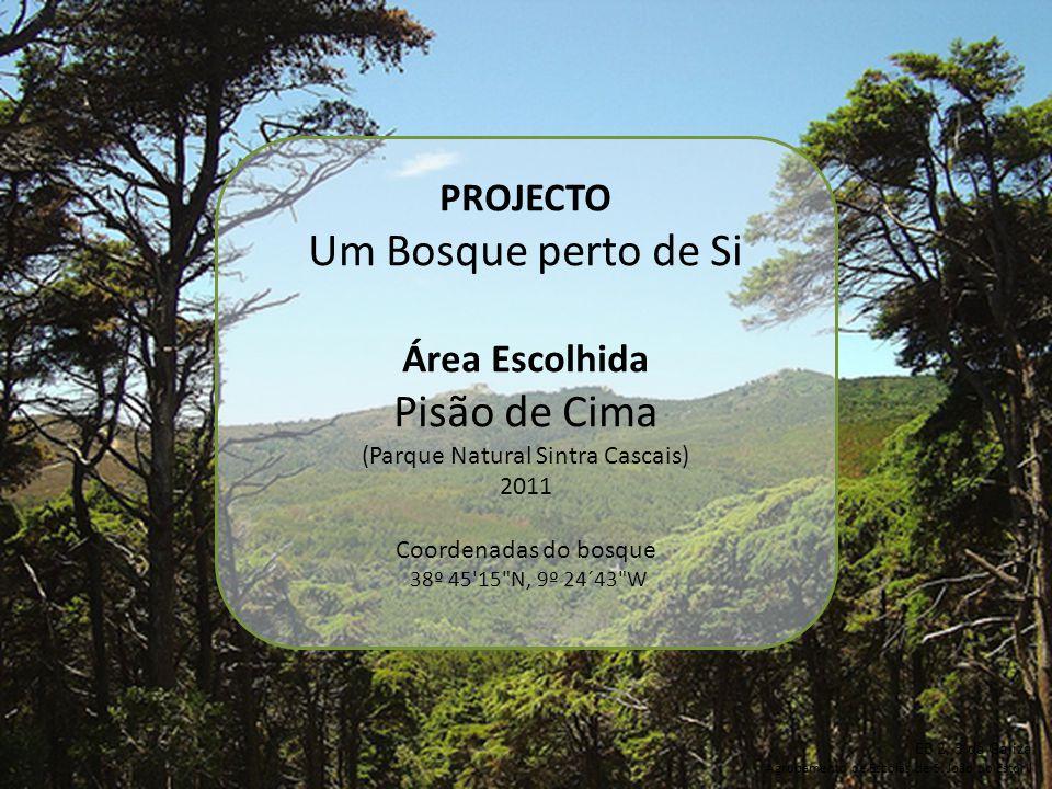 PROJECTO Um Bosque perto de Si Área Escolhida Pisão de Cima (Parque Natural Sintra Cascais) 2011 Coordenadas do bosque 38º 45 15 N, 9º 24´43 W