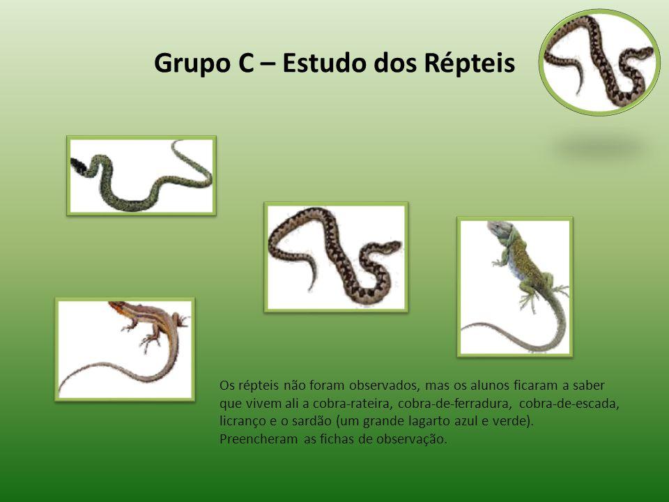 Grupo C – Estudo dos Répteis