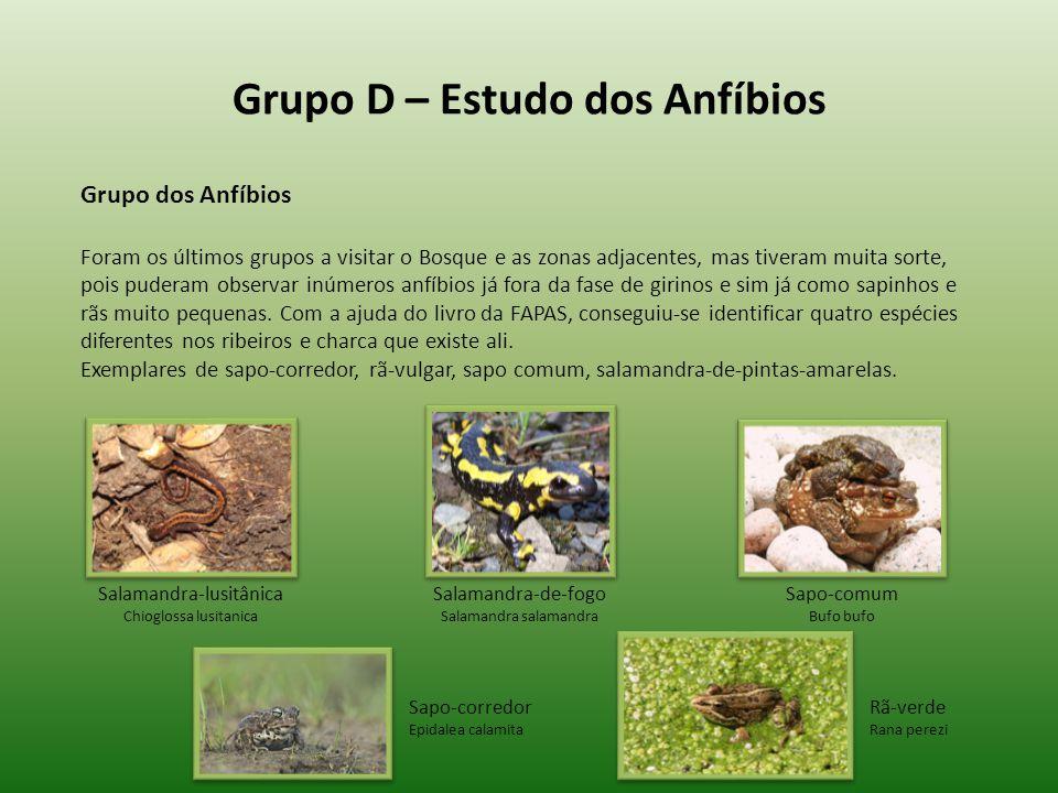 Grupo D – Estudo dos Anfíbios