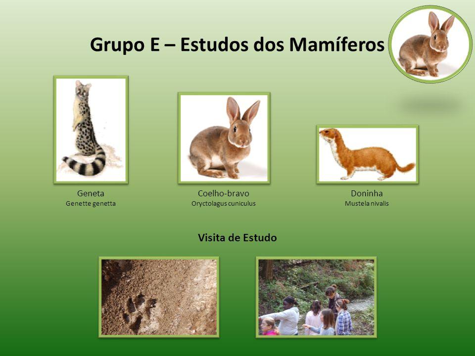 Grupo E – Estudos dos Mamíferos