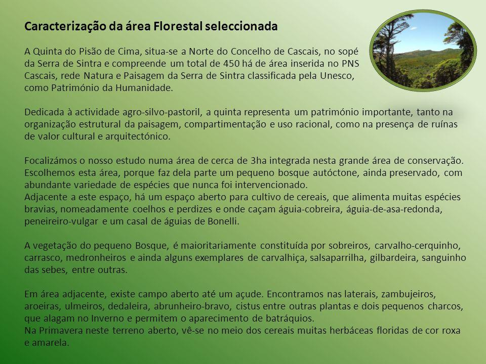 Caracterização da área Florestal seleccionada A Quinta do Pisão de Cima, situa-se a Norte do Concelho de Cascais, no sopé da Serra de Sintra e compreende um total de 450 há de área inserida no PNS Cascais, rede Natura e Paisagem da Serra de Sintra classificada pela Unesco, como Património da Humanidade.