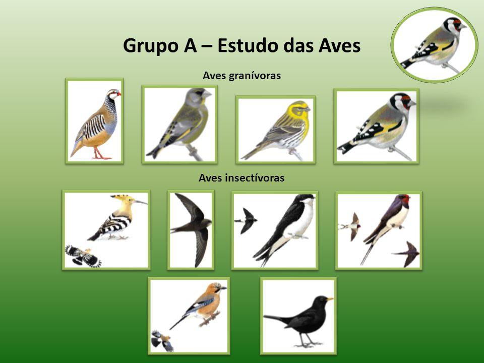 Grupo A – Estudo das Aves