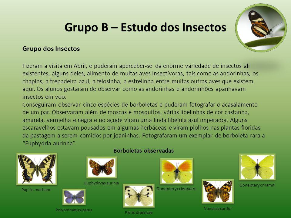 Grupo B – Estudo dos Insectos
