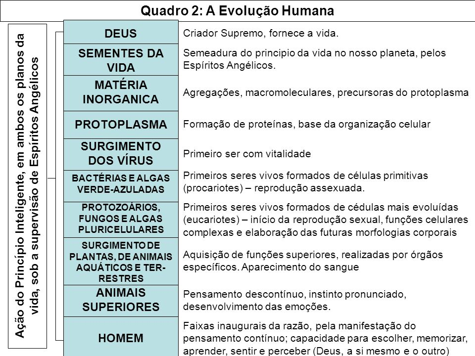 Quadro 2: A Evolução Humana
