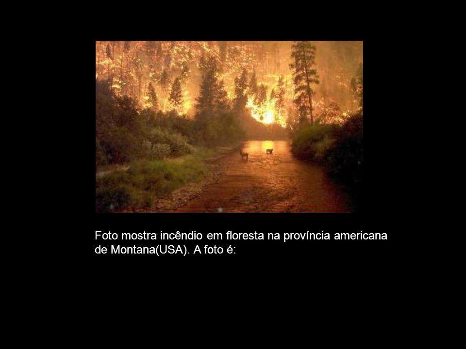 VERDADEIRA Foto mostra incêndio em floresta na província americana
