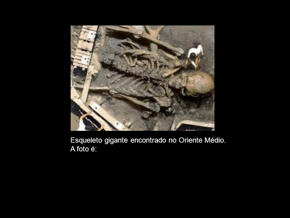 Esqueleto gigante encontrado no Oriente Médio.