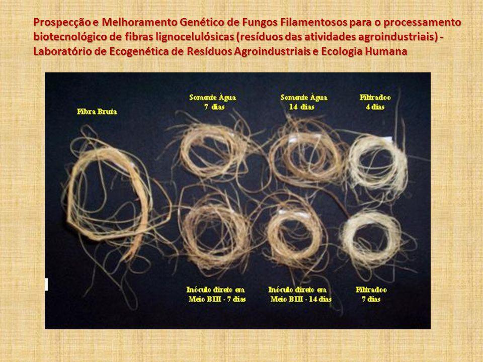 Prospecção e Melhoramento Genético de Fungos Filamentosos para o processamento biotecnológico de fibras lignocelulósicas (resíduos das atividades agroindustriais) - Laboratório de Ecogenética de Resíduos Agroindustriais e Ecologia Humana