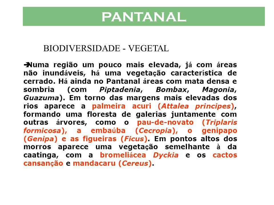 BIODIVERSIDADE - VEGETAL